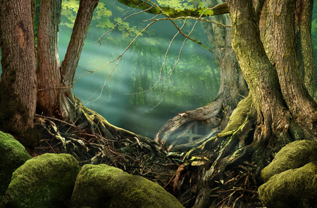 Forest landscape with sunbeams, roots, mossy stones Stok Fotoğraf