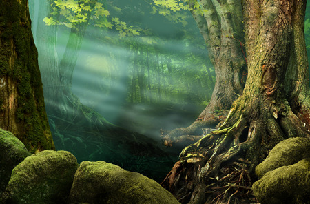 deep roots: Forest landscape with old trees, sunbeams, mossy stones, roots