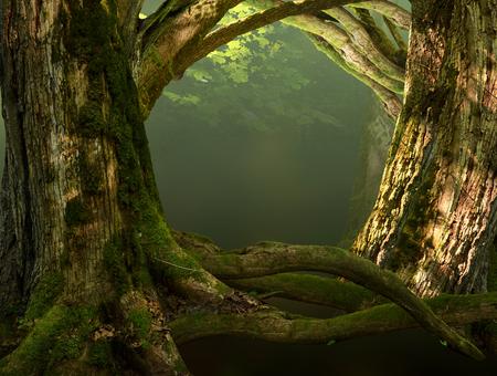 Les vieux arbres moussus, racines tordues, des branches dans le soleil