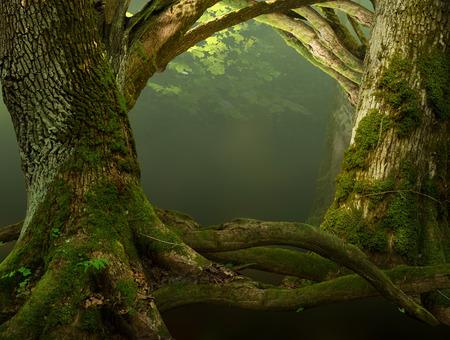 Oude bemoste bomen met kromme takken en wortels