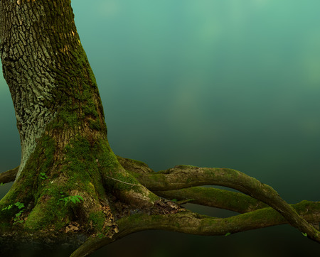 deep roots: Old mossy tree with crooked roots on blue mysterious background Stock Photo