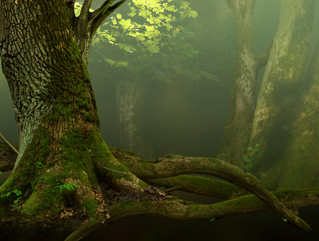 massive: Landscape with old mossy tree and roots