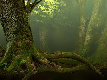 tronco: Paisaje con el viejo árbol cubierto de musgo y raíces