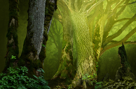 Mysterious fantasy forest with old mossy oaks
