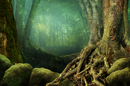 Landscape with shady forest, old trees, weird roots and mossy stones Stok Fotoğraf