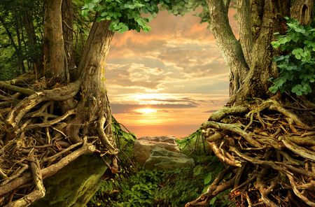 Landscape with pink sunset sky, trees, crooked interlaced roots and rocks