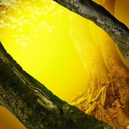 Landscape with mossy trees, roots through mysterious yellow light Stock Photo