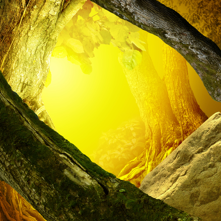 Old mossy trees, rock, yellow shine