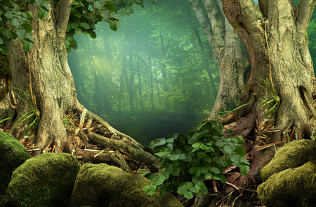 Forest landscape with massive trees and roots Stok Fotoğraf