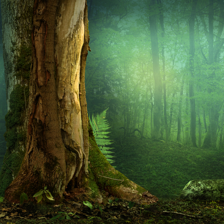 Landscape with old tree and fem in blue haze forest Stock Photo