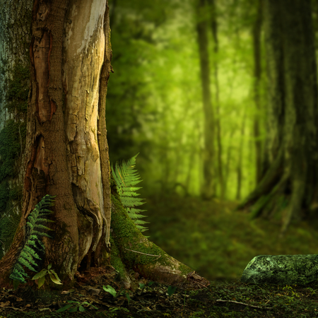 Landscape with old hollowed tree and fems in dark forest Stock Photo