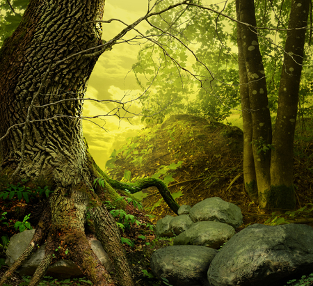 Old massive oak, maple, rocks, weird roots, yellow sky