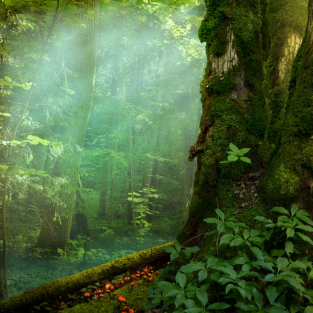 Landscape with mossy tree and sunbeams in forest Stok Fotoğraf