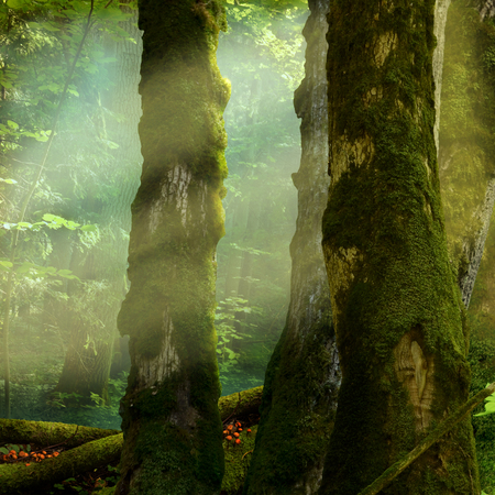 Sunbeams between mossy hollowed trees in summer forest.