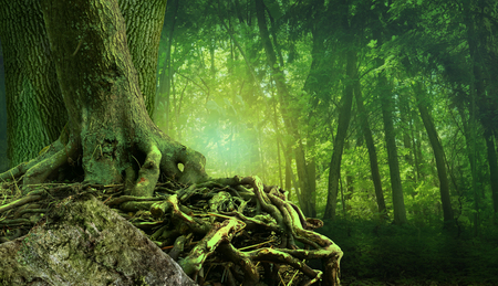 Mysterious forest landscape with shining light, old tree, crooked interlaced roots and rock Stok Fotoğraf