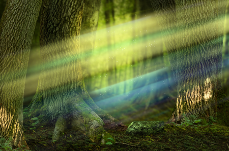 Colorful sunbeams in fairytale forest with old massive trees Stok Fotoğraf