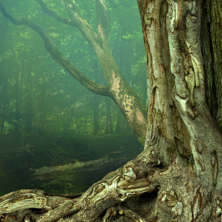 Old weird hollowed chimeric tree with crooked roots in blue hazy mysterious forest 写真素材