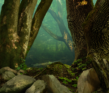 Old mossy oak trees and stones in ancient shady celtic forest with blue haze 写真素材