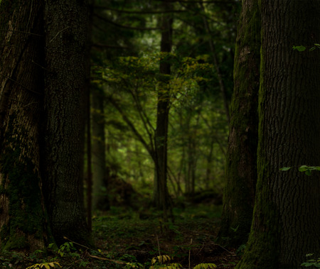 Dark forest landscape framed by old mossy trees