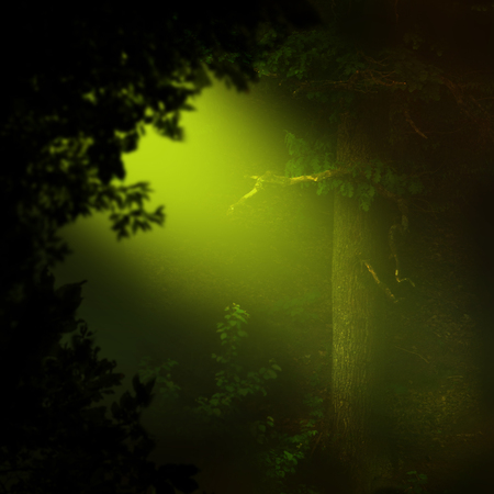 Mysterious golden ray of light in dark forest with oak and foliage silhouette