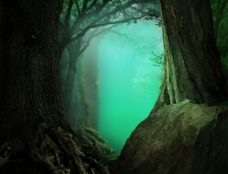 Mysterious fantasy forest landscape with light blue transparent haze on a background 写真素材