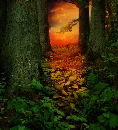 Dreamy red sunset in dark green fantasy forest 写真素材