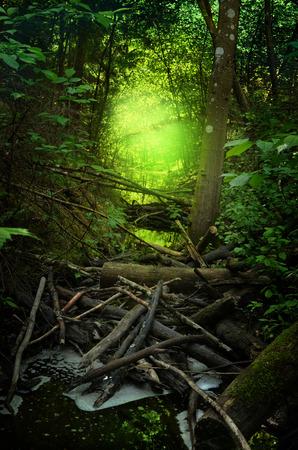 Flusso incantato nella foresta ombrosa con bagliore brillante sullo sfondo
