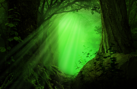 Green fairytale fantasy forest with sun rays