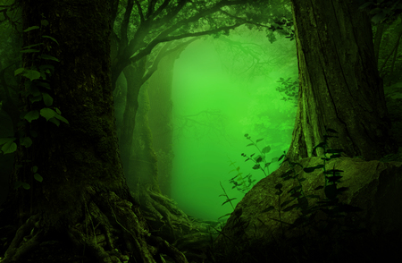 Fantasy forest with green mist and ancient trees