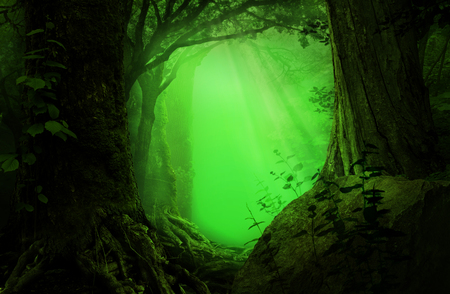 Fairytale forest landscape. Mysterious transparent green glow framed by old dark trees 写真素材