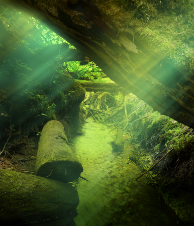 Colorful sunrays over golden creek under fallen thick tree log 写真素材