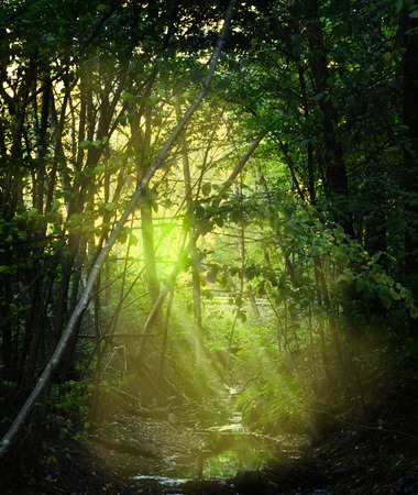 Golden yellow transparent sunrays over creek in ravine in dark forest