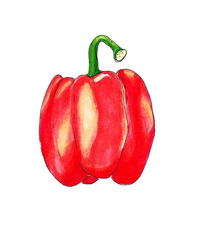 paprika: Red paprika vector