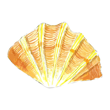 Isolated object sea shell in yellow and orange colors