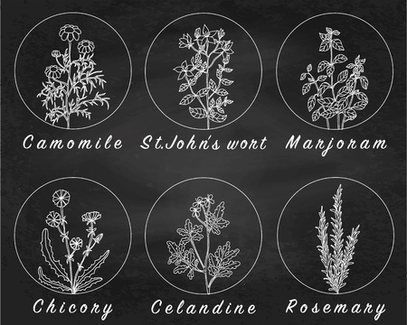 botanic: Set of spices, herbs and officinale plants icons. Healing plants. Medicinal plants, herbs, spices hand drawn illustrations. Botanic sketches icons. Chalkboard background. Blackboard background. Illustration