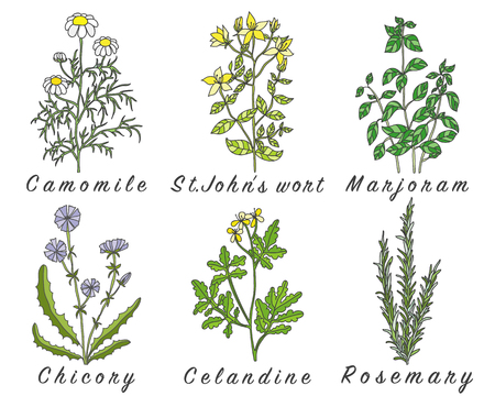 Set of spices, herbs and officinale plants icons. Healing plants. Medicinal plants, herbs, spices hand drawn illustrations. Botanic sketches icons. Vettoriali