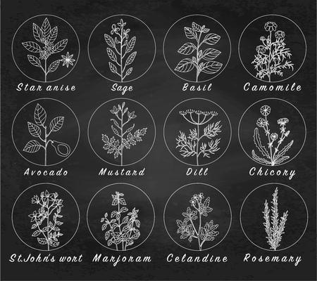 Définir des épices, des herbes et des plantes officinale icônes. Plantes médicinales. Les plantes médicinales, des herbes, des épices illustrations tirées de la main. Botanic esquisse icônes. fond Blackboard. fond Chalkboard.
