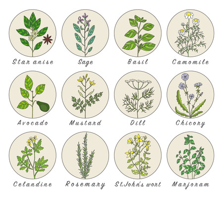 Set of spices, herbs and officinale plants icons. Healing plants. Medicinal plants, herbs, spices hand drawn illustrations. Botanic sketches icons. Ilustracja