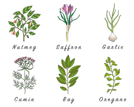 healing: Set of spices, medicinal herbs and officinale healing plants icons. Hand drawn illustrations. Botanic sketches.