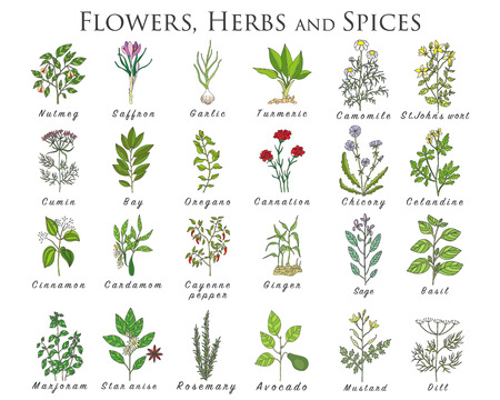 Set of spices, herbs and officinale plants icons. Healing plants. Medicinal plants, herbs, spices hand drawn illustrations. Botanic sketches icons. Ilustração