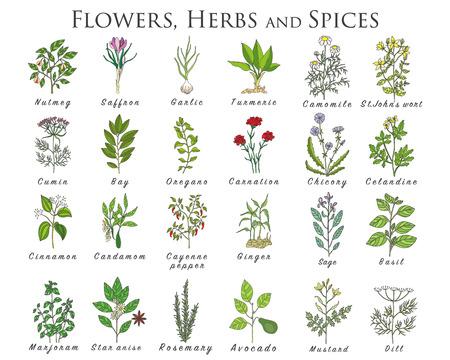 Set van specerijen, kruiden en officinale planten iconen. Geneeskrachtige planten. Medicinale planten, kruiden, specerijen hand getekende illustraties. Botanic schetst pictogrammen.
