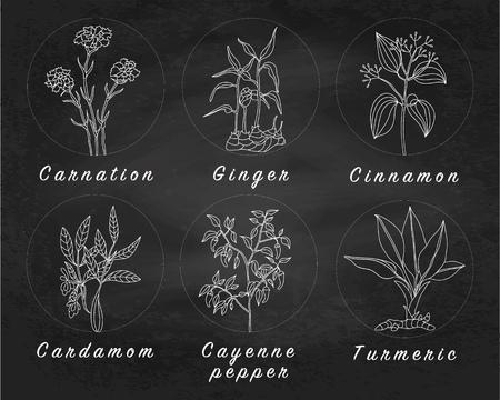 Set von Gewürzen, Kräutern und Pflanzen officinale Symbole. Heilpflanzen. Heilpflanzen, Kräuter, Gewürze Hand gezeichnete Illustrationen. Botanische Skizzen Symbole.