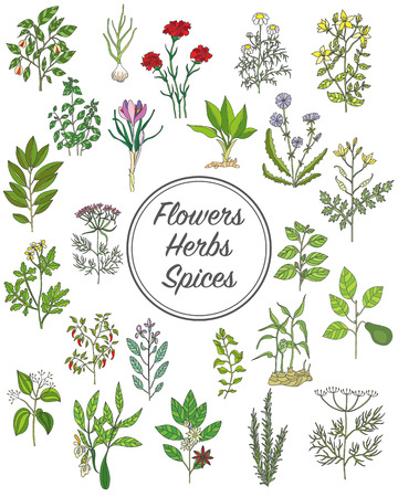 Set of spices, herbs and officinale plants icons. Healing plants. Medicinal plants, herbs, spices hand drawn illustrations. Botanic sketches icons. Vectores
