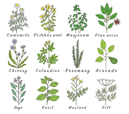 botanic: Set of spices, herbs and officinale plants icons. Healing plants. Medicinal plants, herbs, spices hand drawn illustrations. Botanic sketches icons. Illustration