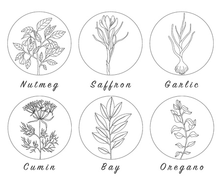 Set of spices, herbs and officinale plants icons. Healing plants. Medicinal plants, herbs, spices hand drawn illustrations. Botanic sketches icons. Stock Photo