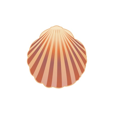 Seashell illustration Stock Vector - 13058226