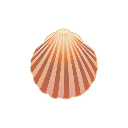 almeja: Seashell ilustraci�n Vectores