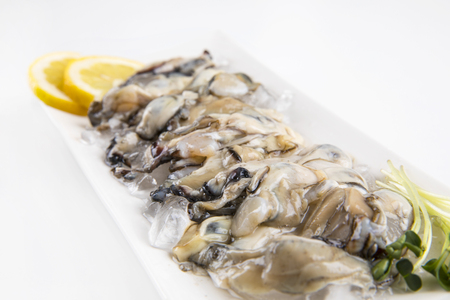fresh oysters in a white plate