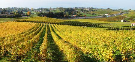 montreux: Vineyards in Montreux against Geneva lake, Switzerland
