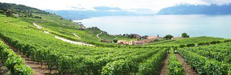 Famouse vineyards in Lavaux region against Geneva lake. Switzerland